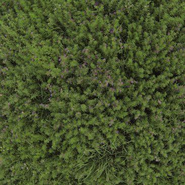 Orchard / Alfalfa